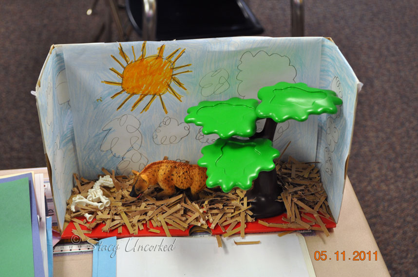Cheetah habitat project for kids for Habitat container