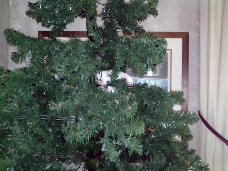 KittyTree