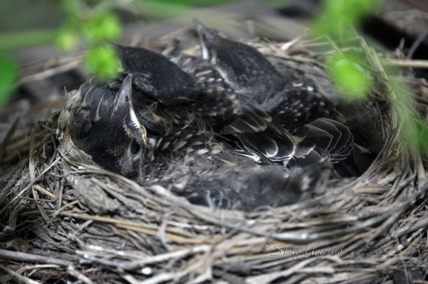 BabyBirds4
