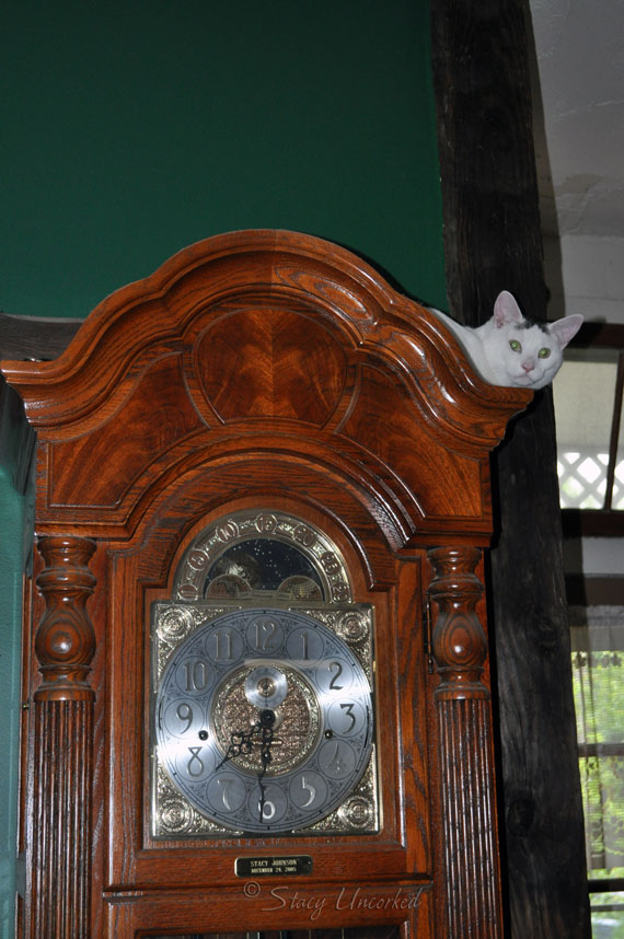 CatClock1