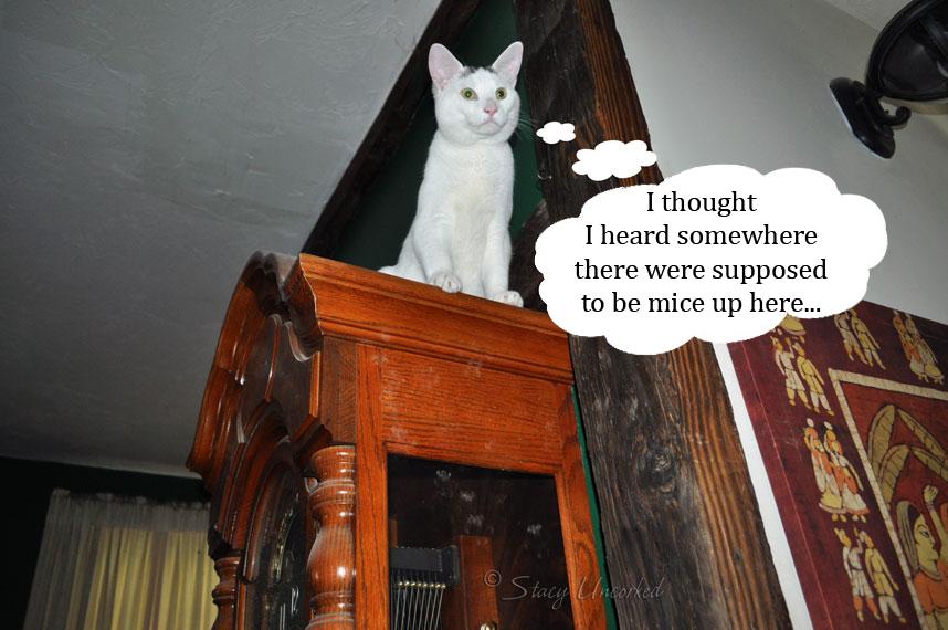 CatClock2