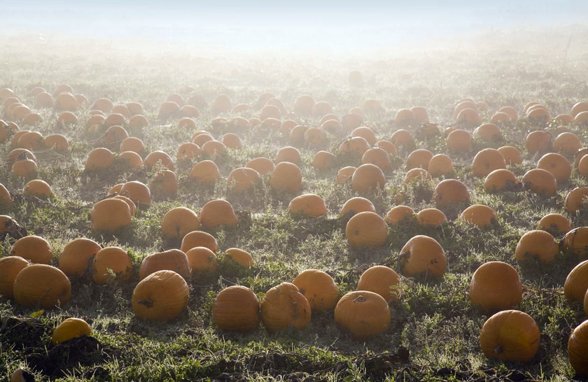 FoggyPumpkins