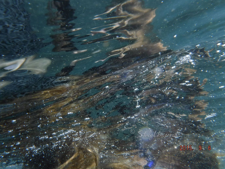 SnorkelingHawaii8