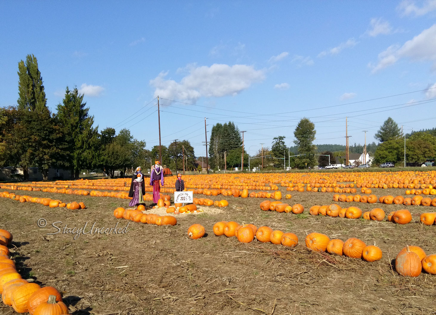 PumpkinPatch2015