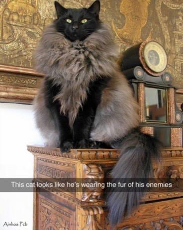 FurryKitty