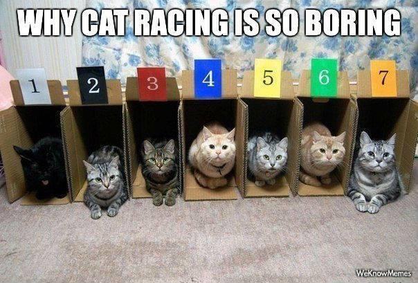 CatRaces
