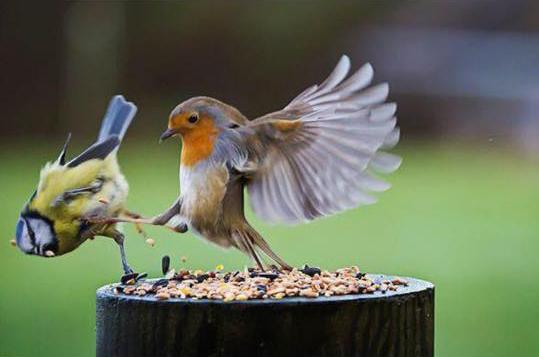 SpartaBirds