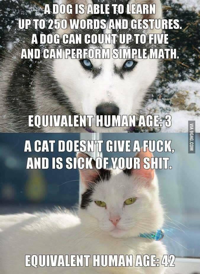 CatDogFunny