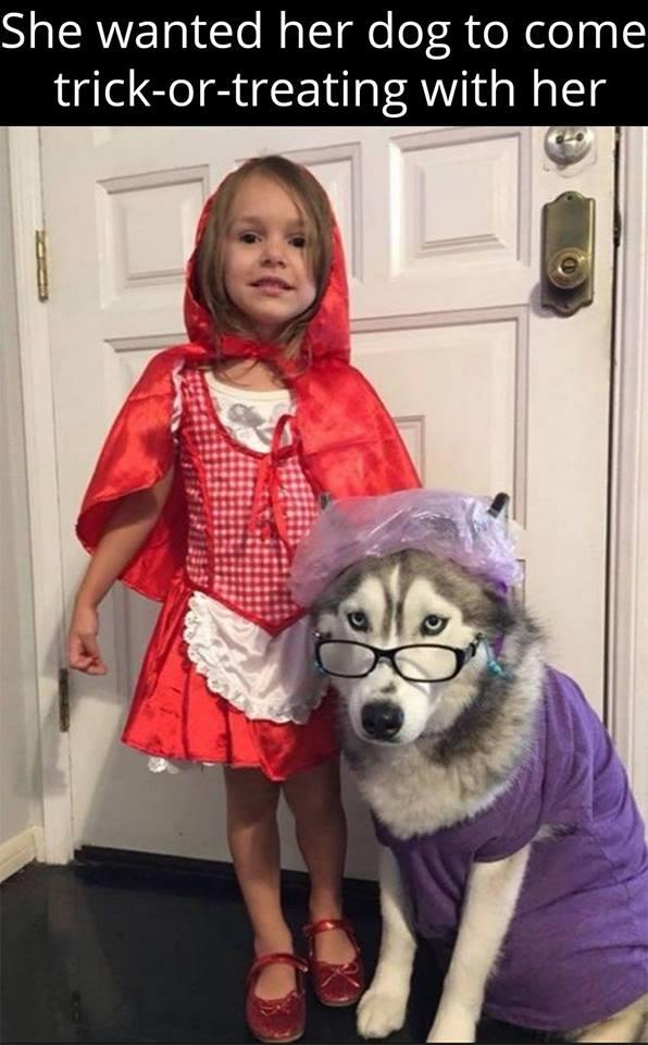 redridinghoodgrannydog